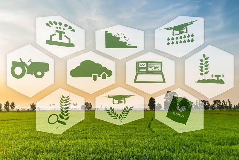 siar marche: il sistema informativo per l'Agricoltura della Regione Marche